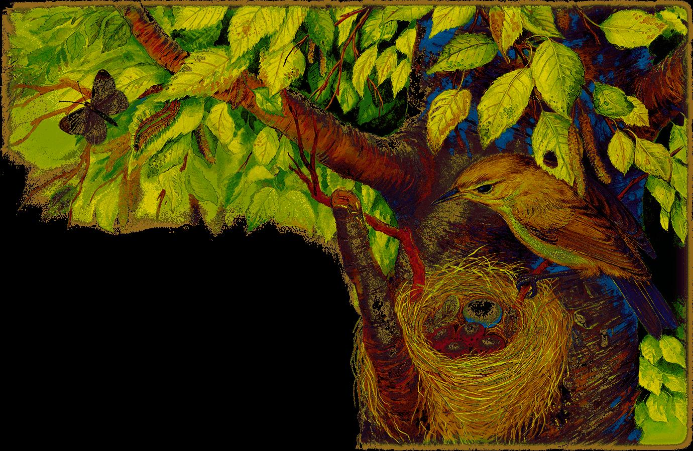 Иллюстрации к рассказу подкидыш бианки