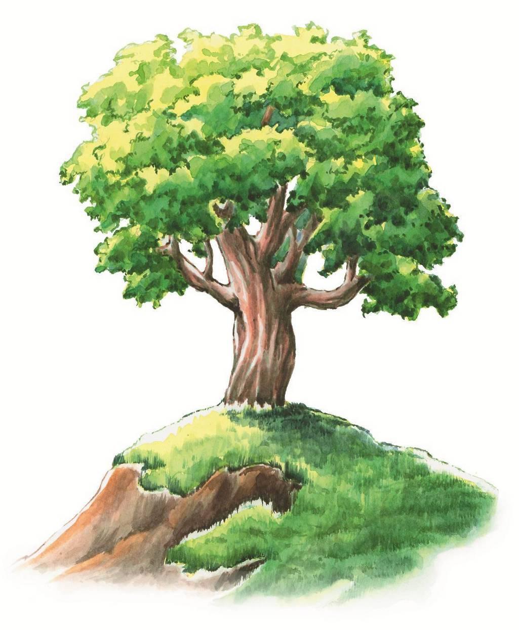 картинка большого дерева в рисунках уроки вязанию сарафана