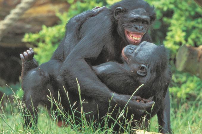 горилла и женщина заняты сексом