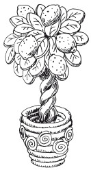 картинка лимонное дерево распечатать реализует грязевики