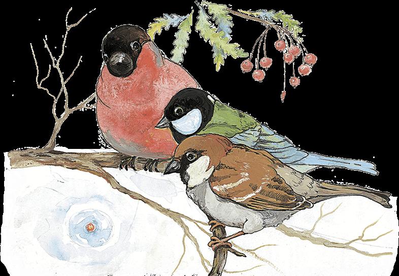 Картинки снегири синицы для детей