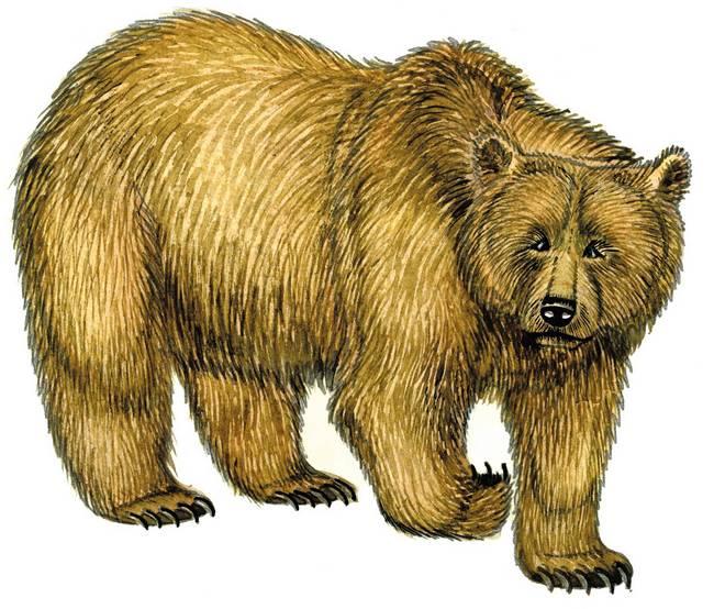 Детские картинки медведь, картинки августа