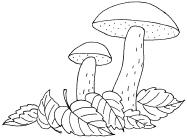 картинки грибов для раскрашивания подосиновик познакомиться причинами смуты