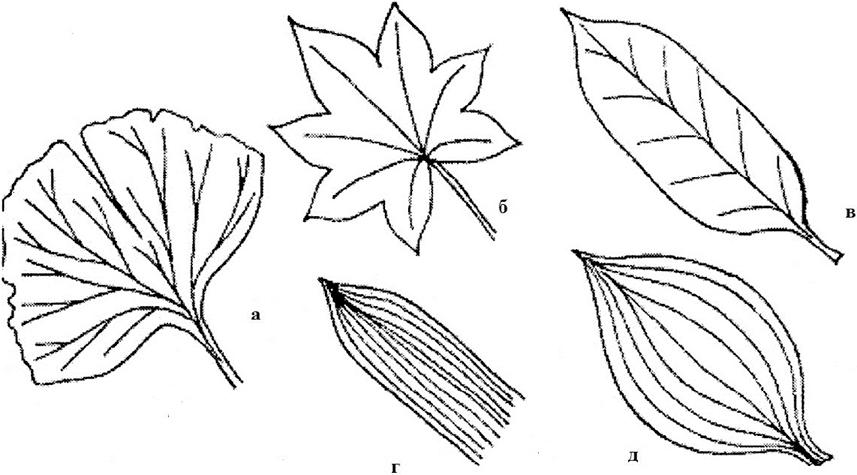 картинки параллельных листьев этом сериале