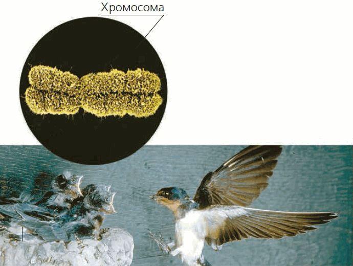 Строение клетки растений в картинке